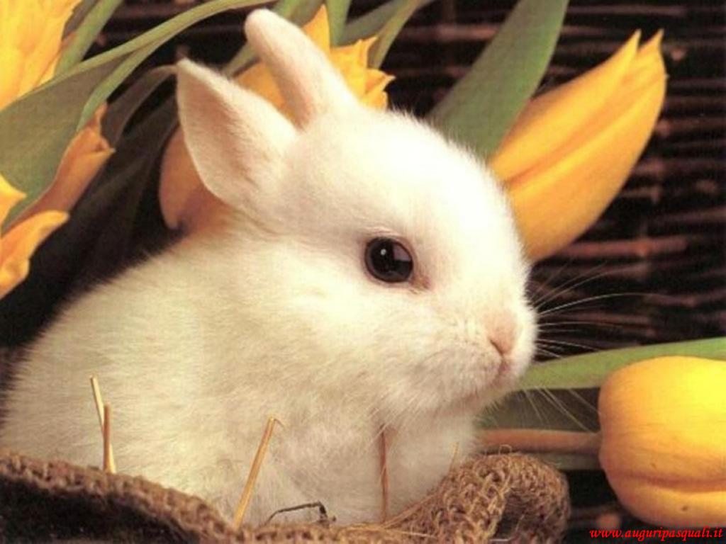 Immagine Coniglio Bianco Di Pasqua