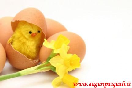 Immagine Pulcino Giallo Di Pasqua