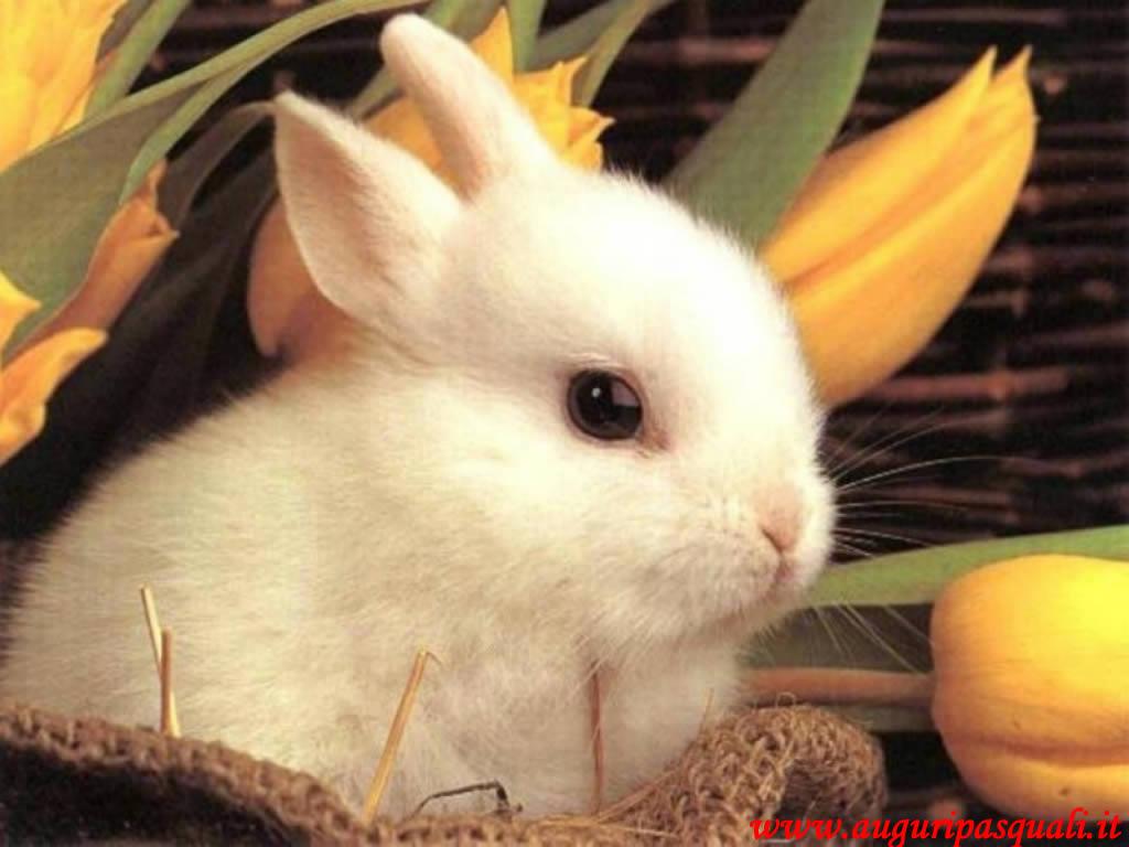 Sfondo Coniglio Pasquale