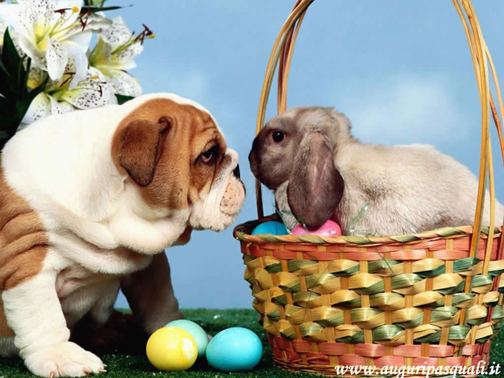 Sfondo Pasqua Cane E Coniglio